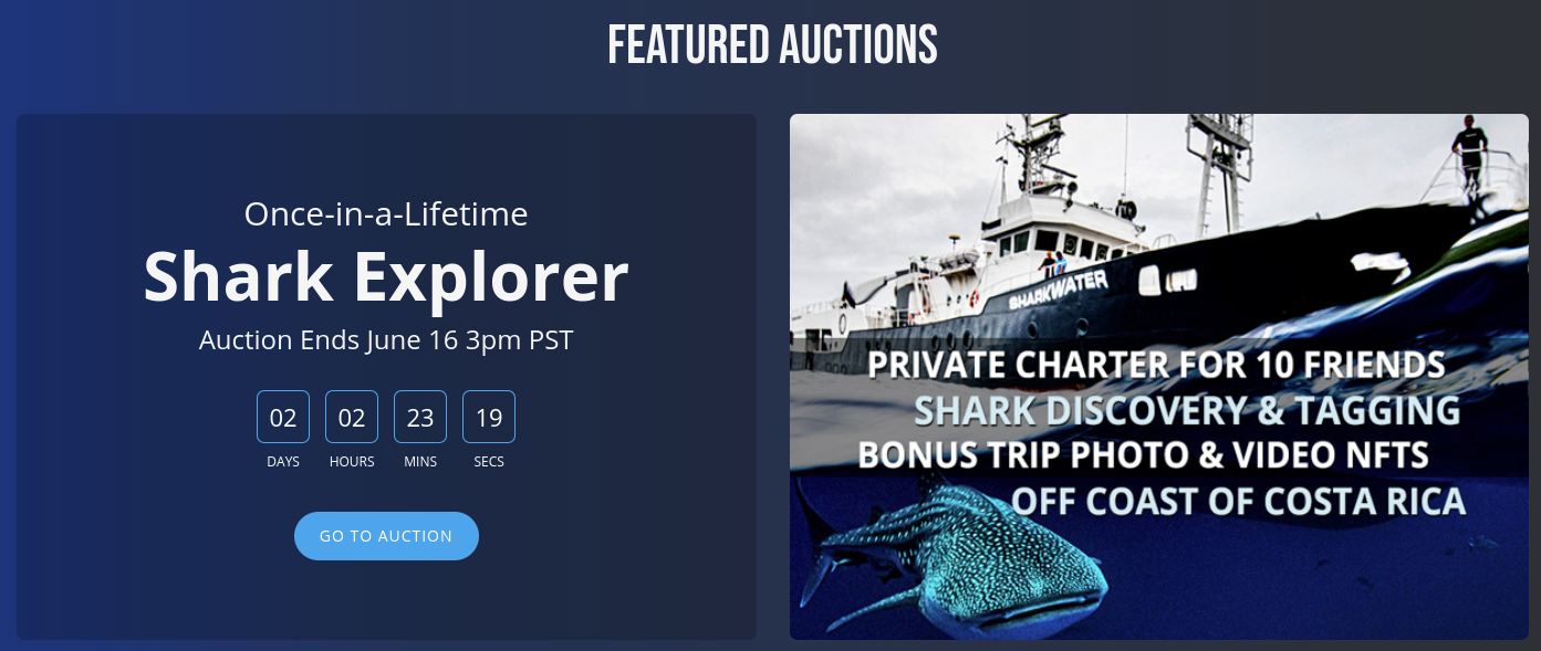 Fins Attached featured auction